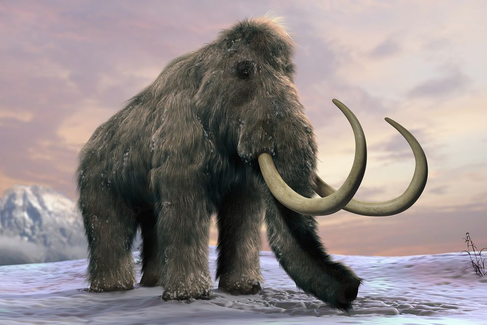 Antimicrobial Stewardship: a NICE woolly mammoth of a task!