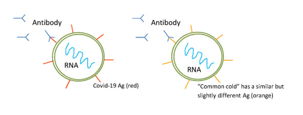 antigen tests for viruses covid-19